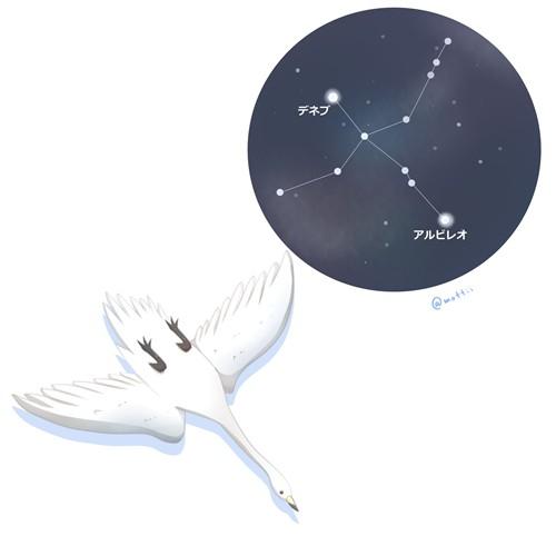 はくちょう座(Cygnus)