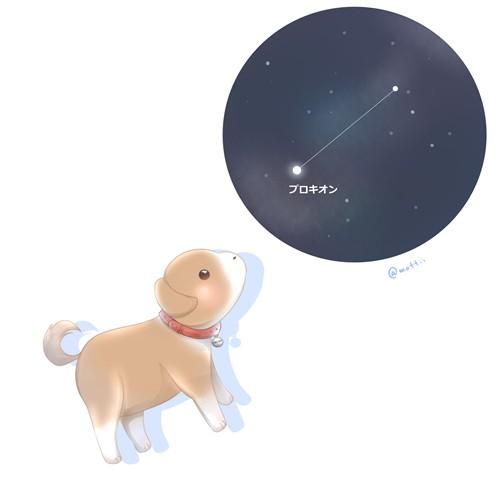 こいぬ座(Canis Minor)
